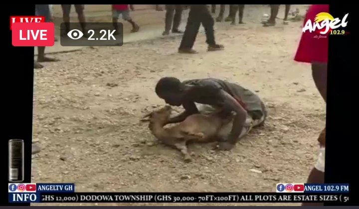 """newslite1617236891725 - This Is Lawless"""" Thief Was Forced To Chop Love With A Goat He Stole After He Was Beaten Up"""