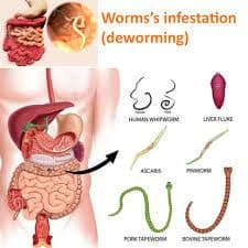 Deworm 1 - Reasons why we should never forget to deworm periodically